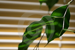 Green Leaf Stock Photography - Image: 5206842