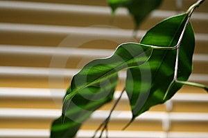 Groen Blad Stock Fotografie - Afbeelding: 5206842