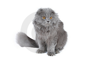 Fluffy Cat Royalty Free Stock Image - Image: 5211106