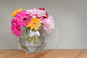 Gerber Daisies In A Vase Royalty Free Stock Photography - Image: 5214747