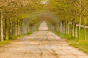 Spring In The Tree Alley Stock Photography - Image: 5217872