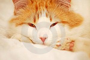 Catnap Stock Photo - Image: 5218610