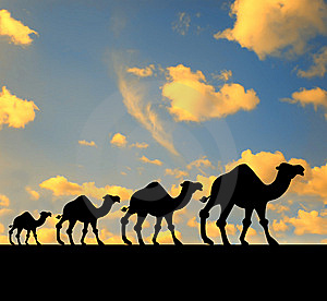 Walking Animals Royalty Free Stock Images - Image: 5254889