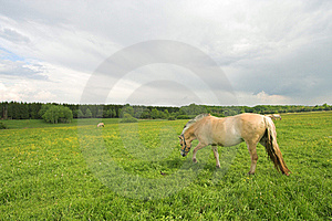 Horses on field Free Stock Image