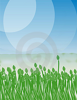 Green Tulip On The Blue Sky Stock Images - Image: 5263934