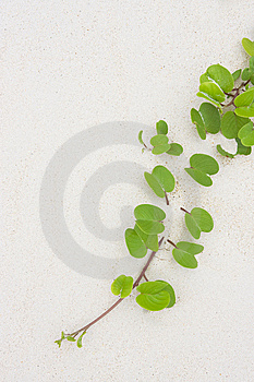 Tropical Leaves Royalty Free Stock Photos - Image: 5268388