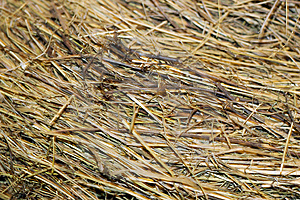 Hay Texture Royalty Free Stock Images - Image: 5269369