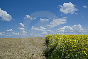 Rapeseed field and ploughed field Free Stock Photos