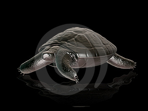 Turtle Stock Images - Image: 5291584