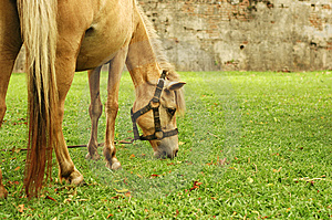 Horse Tied Up Stock Image - Image: 5292001