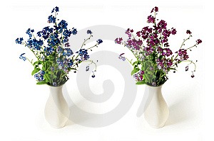 Spring Flowers Royalty Free Stock Photography - Image: 5294837