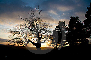 Spooky Tree On Setting Sun Royalty Free Stock Photos - Image: 5301228