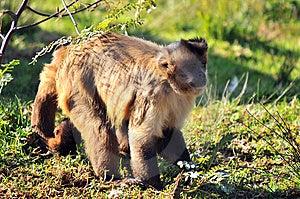 Cheeky Monkey Stock Photos - Image: 5305193