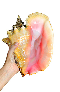 Holding Seashell - Clipping Path Royalty Free Stock Photography - Image: 5306007