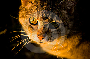Cat In The Sunlight Royalty Free Stock Photos - Image: 5311608