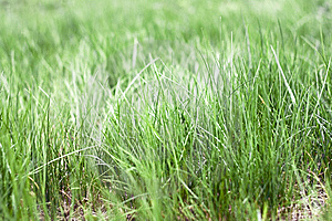 Free Stock Image - Grass