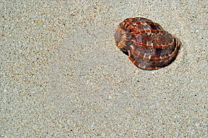 Beach Sand, Sea Shell. Stock Images - Image: 5324794