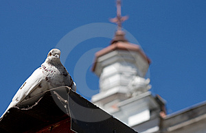 White Pigeon Near The Church Stock Photography - Image: 5332512