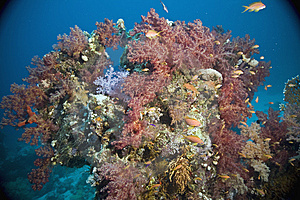 Coral And Fish Stock Photos - Image: 5346673