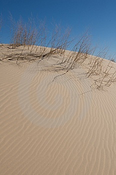 Sand Dunes With Tall Grass And A Blue Sky Stock Image - Image: 5358371