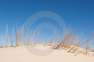 Sand Dunes With Tall Grass And A Blue Sky Stock Images - Image: 5358464