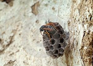 Wasp Stock Photography - Image: 5361232