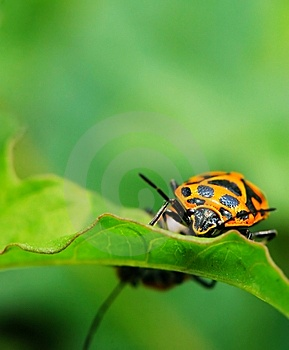 Bug On The Plant Stock Photos - Image: 5363383