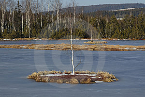 Lonely Birch At Lake Island Stock Photos - Image: 5367633