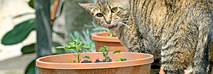 Ridicule Cat Stock Images - Image: 5373184