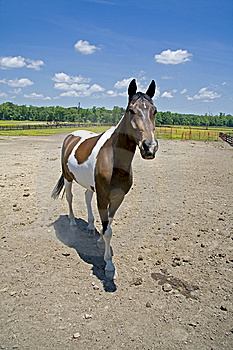 Horse In Field Stock Images - Image: 5374884