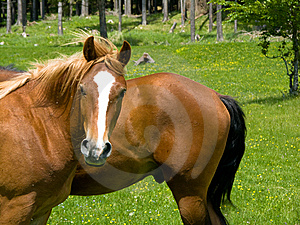 Wild Horse Look Stock Photo - Image: 5375950