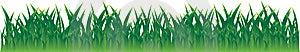 Реальная трава Стоковое Изображение RF - изображение: 5381816