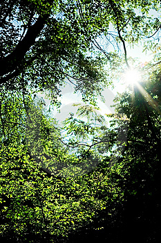 Sunlight In Forest Royalty Free Stock Photography - Image: 5393737