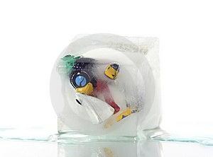 Frozen Penguin Royalty Free Stock Photo - Image: 5399215