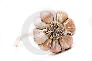 Garlic Isolated Stock Images - Image: 5410044