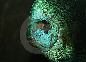 Exotic Fish Stock Photography - Image: 5414502