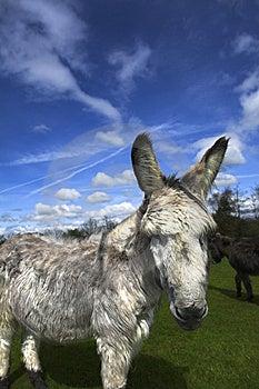 Retired Donkey Royalty Free Stock Photos - Image: 5422718