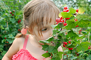 Eating Red Currant Royalty Free Stock Images - Image: 5448059