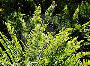 Ferns In Sunlight Stock Image - Image: 5454901