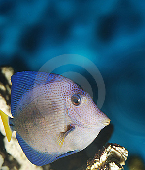 Exotic Fish Royalty Free Stock Photos - Image: 5467268