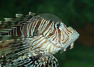 Exotic Fish Stock Photos - Image: 5467283