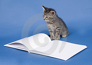 Kitten With Guest Book Stock Photo - Image: 5475670