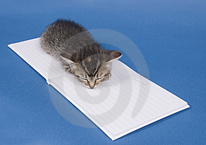 Kitten With Guest Book Stock Photography - Image: 5475672