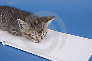Kitten With Guest Book Stock Photos - Image: 5475673