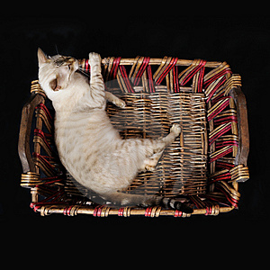 Bengal Cat On A Basket Stock Photography - Image: 5484742