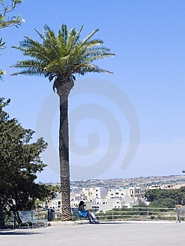 Palm Tree Stock Photography - Image: 5494802
