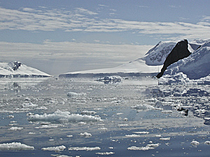 Antarctica Iceberg 3 Stock Photo - Image: 5498840