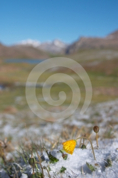 Mountain Meadow In The Morning After Heavy Snow 2 Royalty Free Stock Photo - Image: 553595