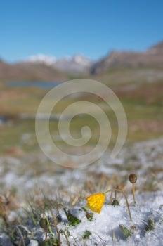 山草甸在大雪2以后的早晨 免版税库存照片 - 图片: 553595