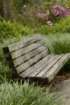Park Bench in tall grass Free Stock Images